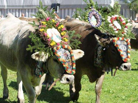 almabtrieb oktoberfest tradition